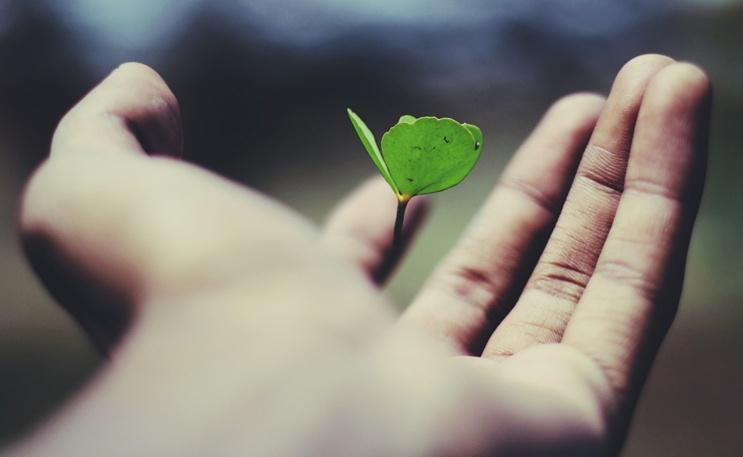 GreenKiteBrexitBlog